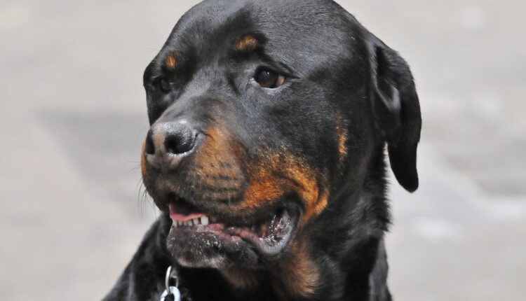 Psovao svog psa i završio na sudu: Zabranili mu da pet godina ima kućne ljubimce